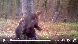 orsi-mamma-e-cucciolo