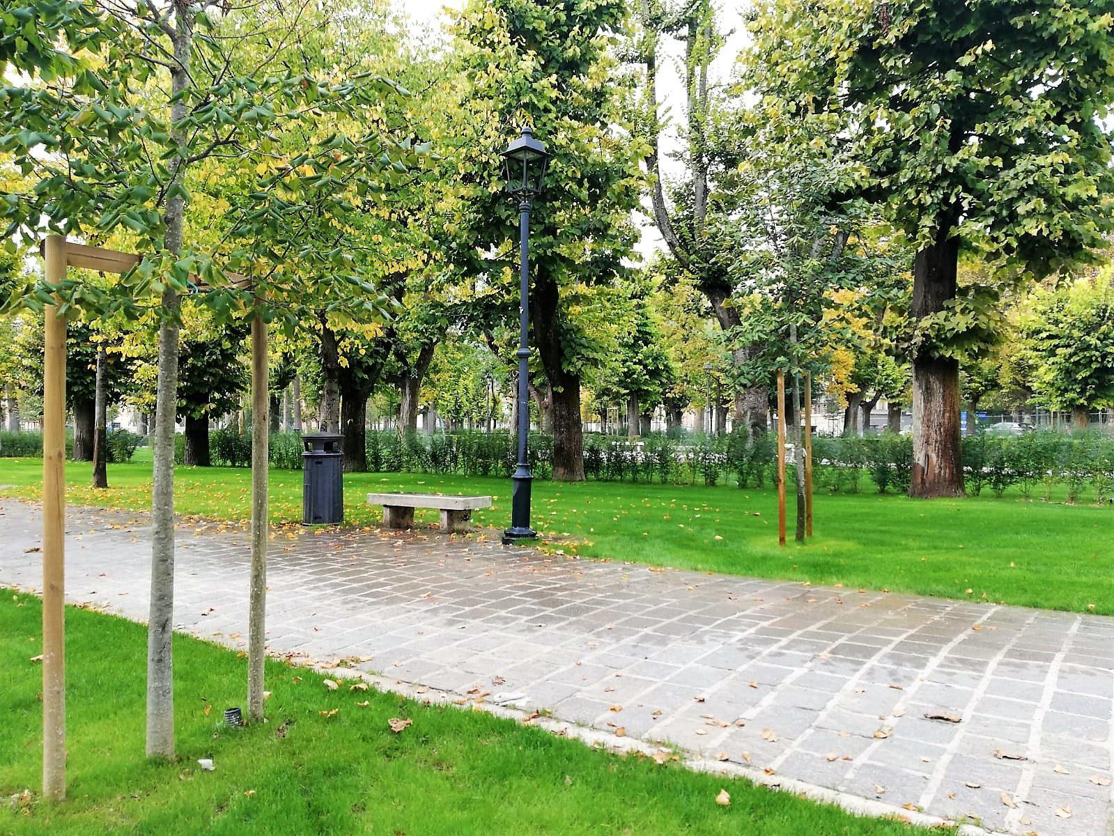Risultati immagini per alberi di piazza torlonia