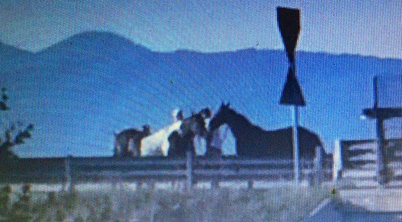 Cavalli in corsa sulla superstrada trasformata in un ippodromo, paura per gli automobilisti